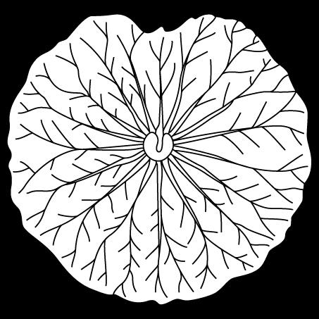 真向き蓮の葉