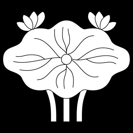蓮の葉(生蓮)